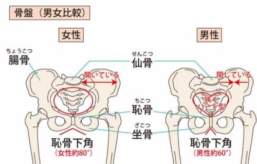 男女の骨盤比較