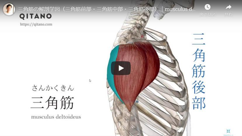 三角筋解剖図をYouTube動画で簡単解説