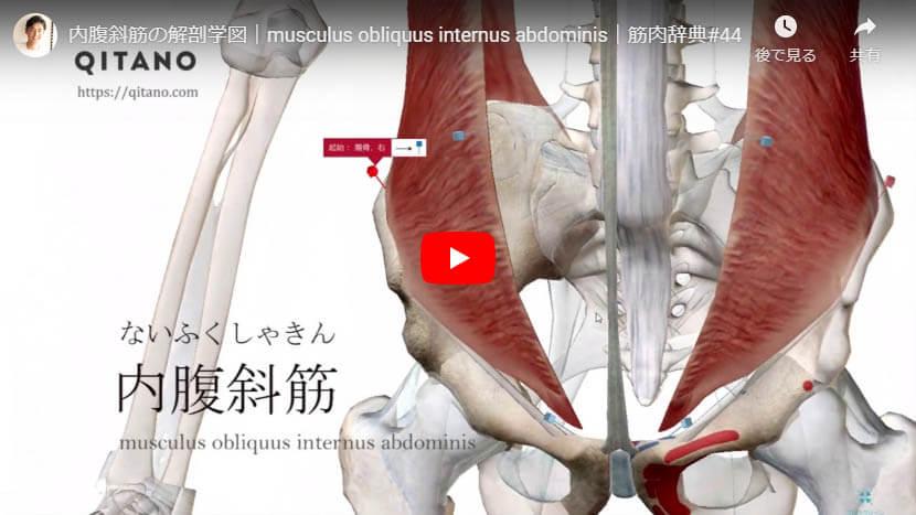 内腹斜筋の解剖図をYouTube動画で簡単解説