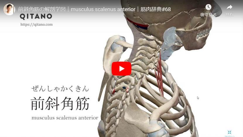 前斜角筋の解剖図をYouTube動画で簡単解説