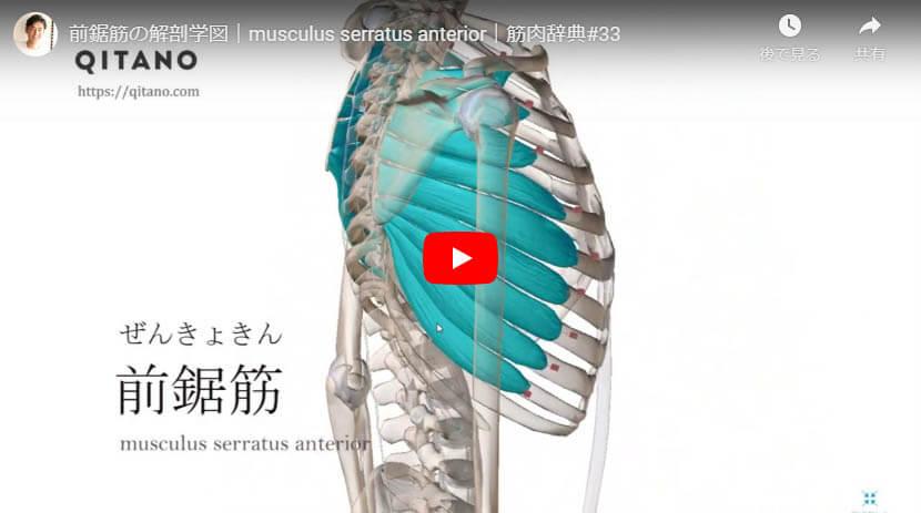 前鋸筋の解剖図をYouTube動画で簡単解説