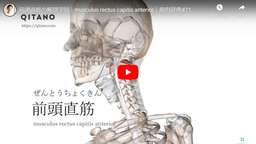 前頭直筋の解剖図をYouTube動画で簡単解説