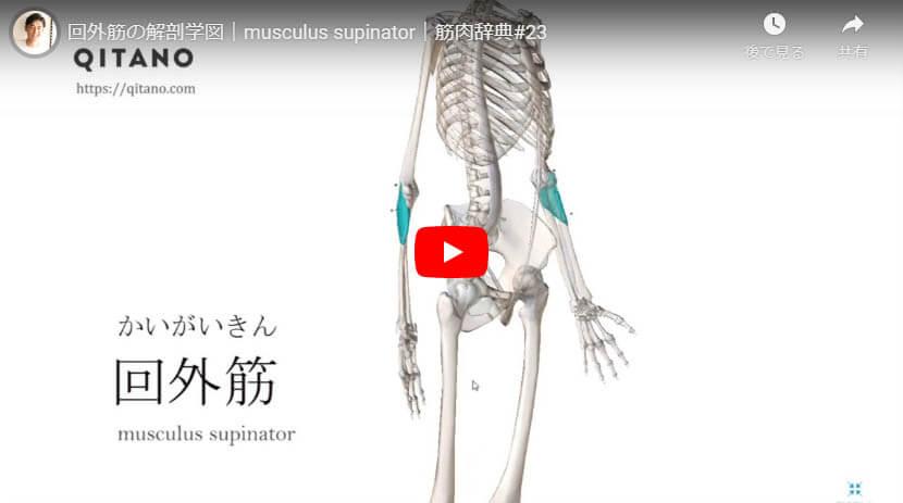 回外筋の解剖図をYouTube動画で簡単解説