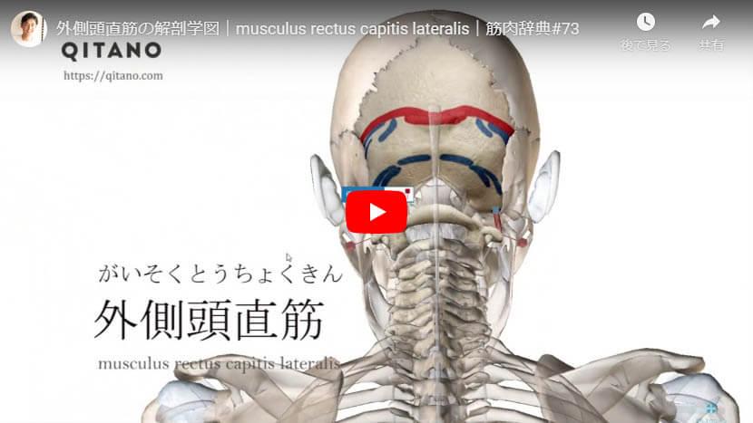 外側頭直筋の解剖図をYouTube動画で簡単解説
