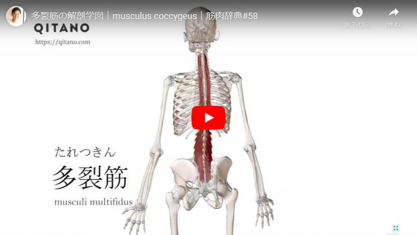 多裂筋の解剖図をYouTube動画で簡単解説
