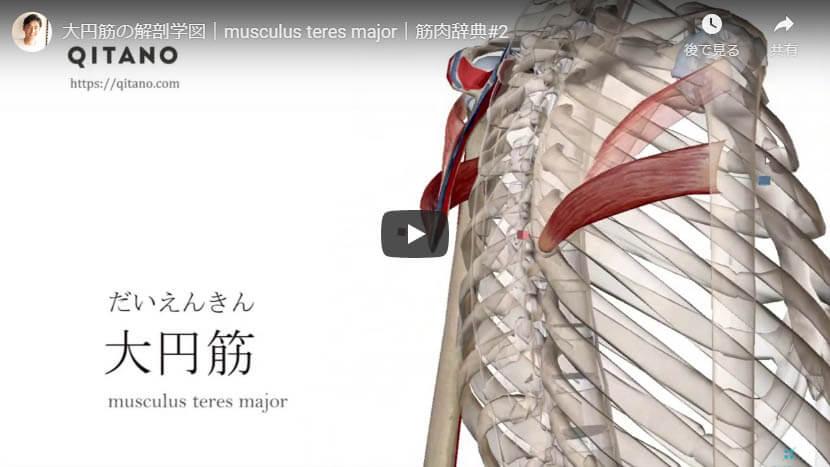 大円筋の解剖図をYouTube動画で簡単解説