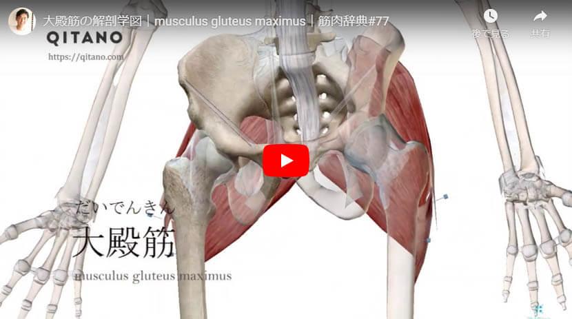 大殿筋の解剖図をYouTube動画で簡単解説