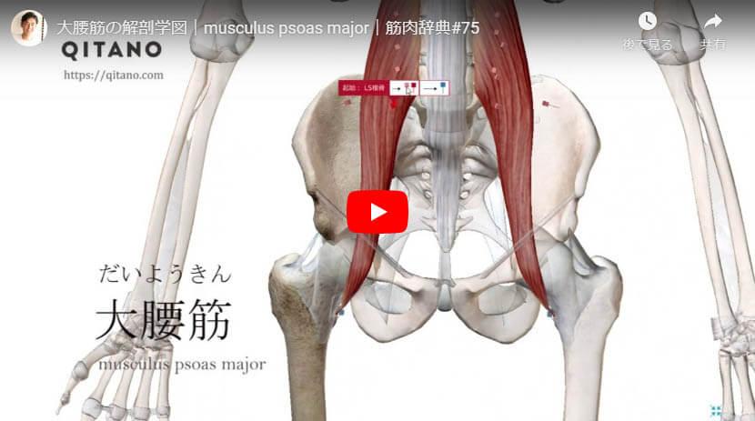 大腰筋の解剖図をYouTube動画で簡単解説