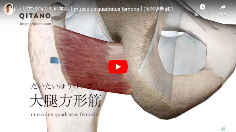 大腿方形筋の解剖図をYouTube動画で簡単解説