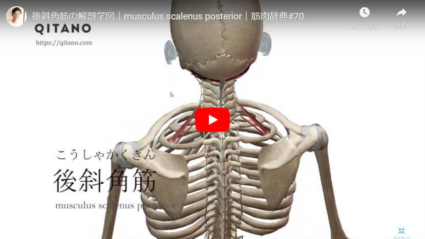 後斜角筋の解剖図をYouTube動画で簡単解説