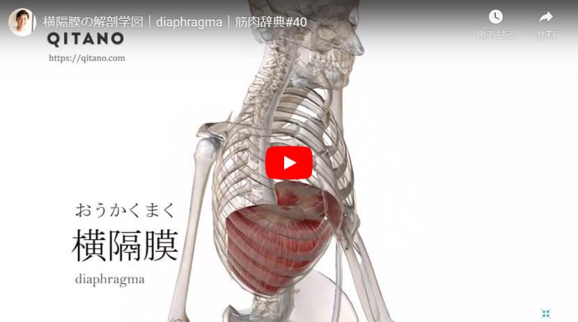 横隔膜の解剖図をYouTube動画で簡単解説