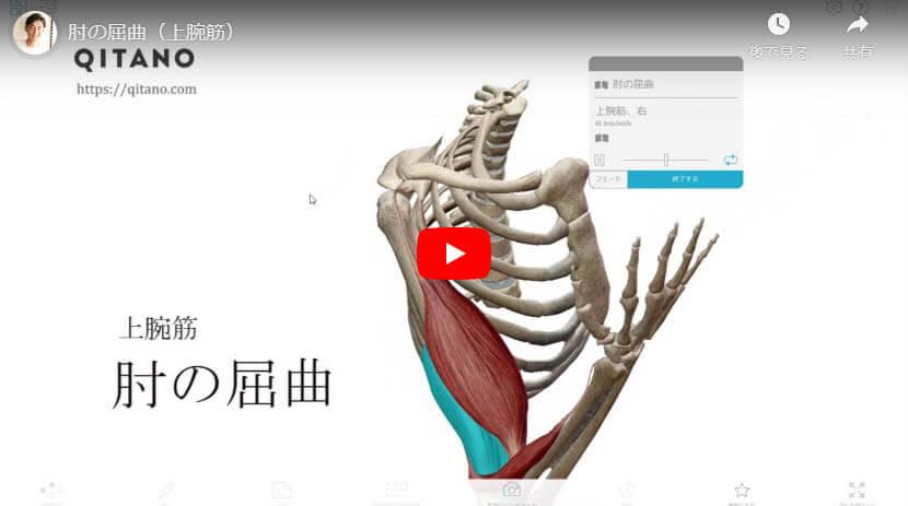 肘の屈曲(上腕筋)