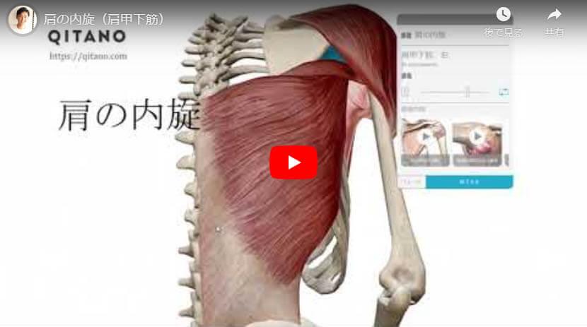 肩の内旋(肩甲下筋)