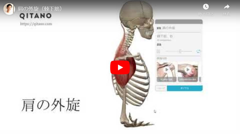肩の外旋(棘下筋)
