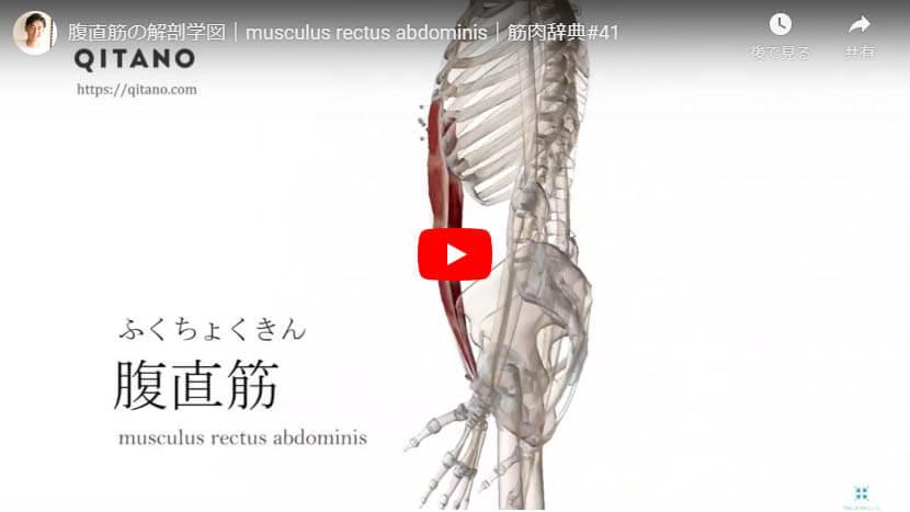 腹直筋の解剖図をYouTube動画で簡単解説