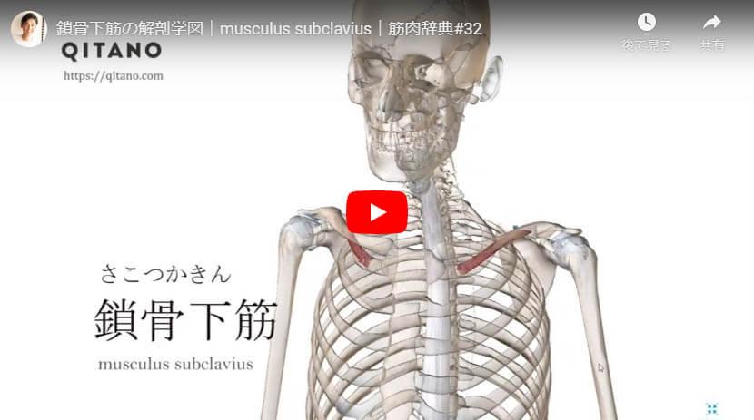 鎖骨下筋の解剖図をYouTube動画で簡単解説