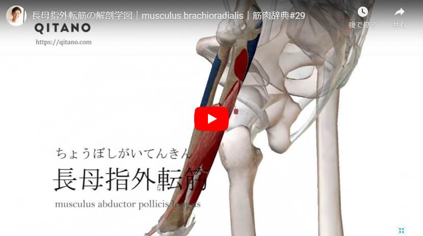 長母指外転筋の解剖図をYouTube動画で簡単解説