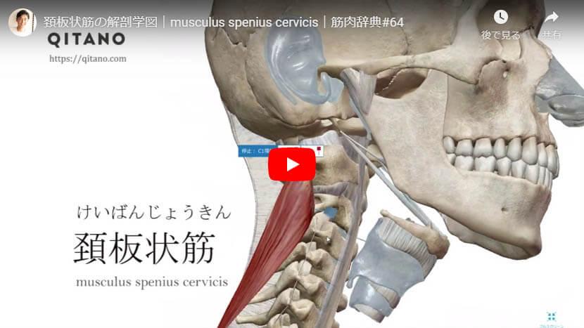 頚板状筋の解剖図をYouTube動画で簡単解説