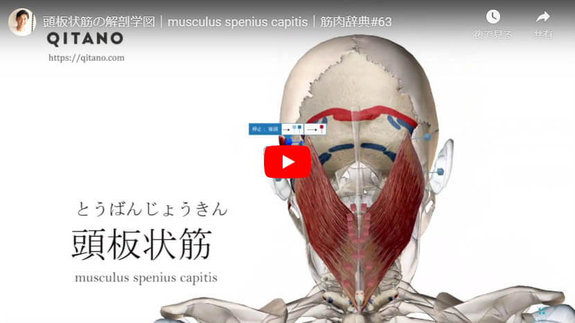 頭板状筋の解剖図をYouTube動画で簡単解説