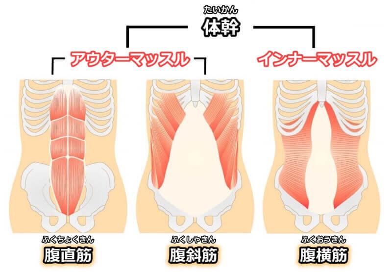体幹とインナーマッスルとアウターマッスル