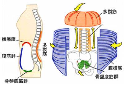 体のコア筋肉
