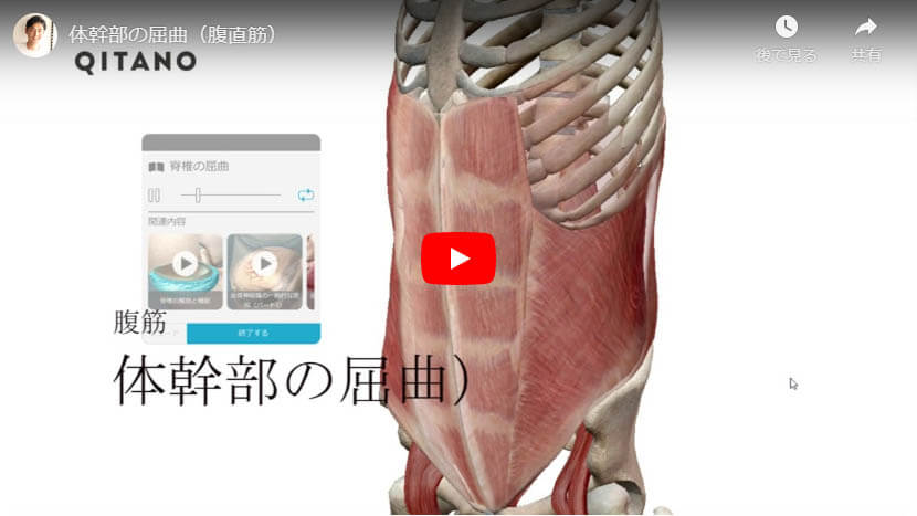 体幹部の屈曲(腹直筋)