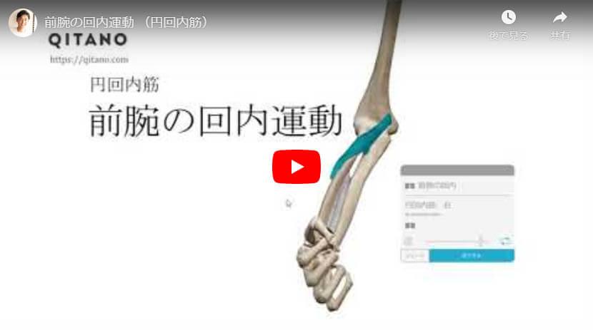 前腕の回内運動 (円回内筋)