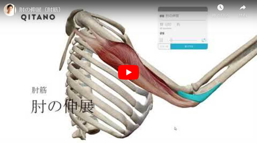 肘の伸展(肘筋)