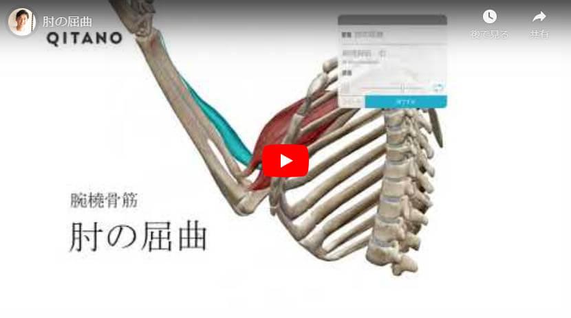 肘の屈曲(腕橈骨筋)