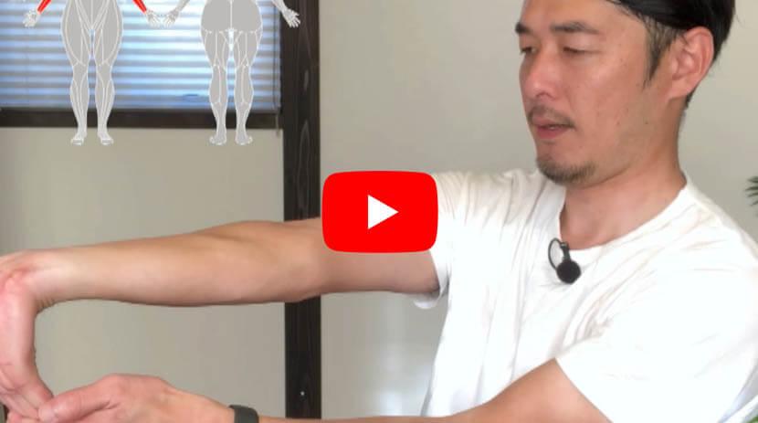 (#39) 上腕筋、腕橈骨筋、橈側手根屈筋、手掌腱膜、上腕二頭筋に効果のあるストレッチ