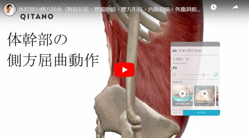 体幹部の側方屈曲(胸最長筋・腰腸肋筋・腰方形筋・内腹斜筋・外腹斜筋・大腰筋)