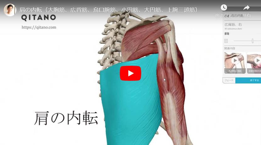 肩の内転(大胸筋、広背筋、烏口腕筋、小円筋、大円筋、上腕三頭筋)