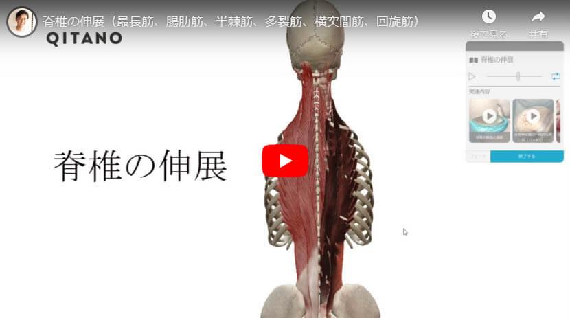 脊椎の伸展(最長筋、腸肋筋、半棘筋、多裂筋、横突間筋、回旋筋)