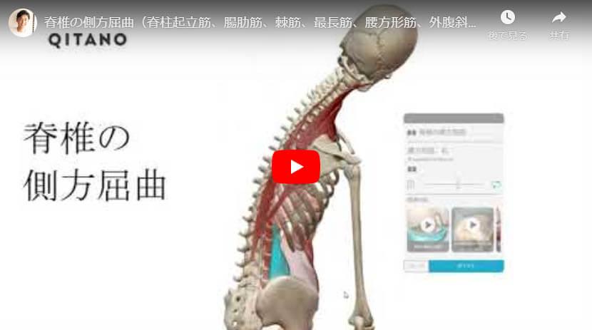 脊椎の側方屈曲(脊柱起立筋、腸肋筋、棘筋、最長筋、腰方形筋、外腹斜筋、内腹斜筋、大腰筋)