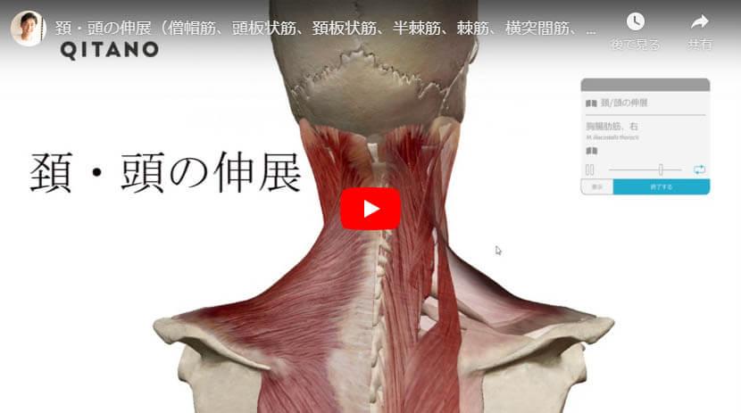 頚・頭の伸展(僧帽筋、頭板状筋、頚板状筋、半棘筋、棘筋、横突間筋、腸肋筋、最長筋、頭斜筋、大後頭直筋、小後頭直筋、多裂筋、回旋筋)