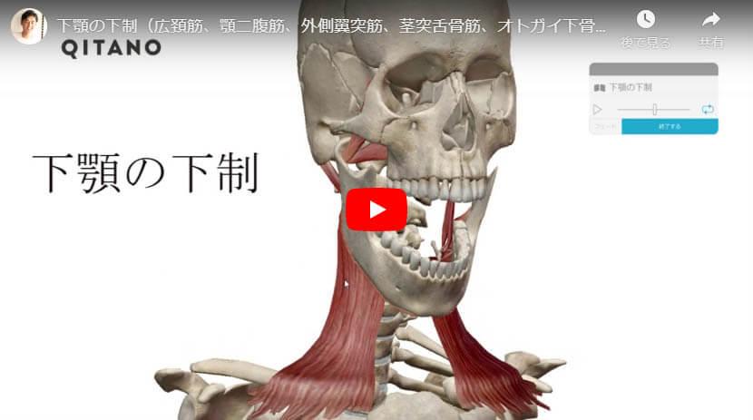 下顎の下制(広頚筋、顎二腹筋、外側翼突筋、茎突舌骨筋、オトガイ下骨筋)