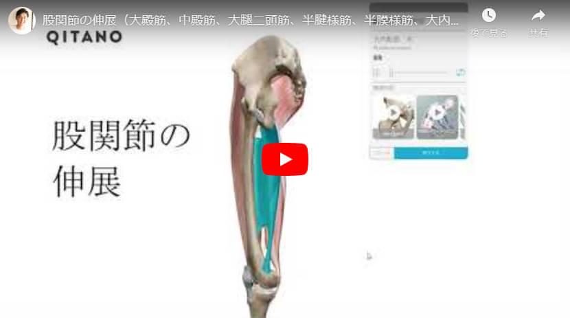 股関節の伸展(大殿筋、中殿筋、大腿二頭筋、半腱様筋、半膜様筋、大内転筋、大腿筋膜張筋)