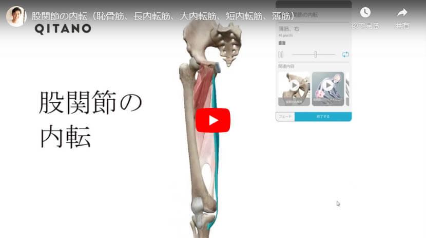 股関節の内転(恥骨筋、長内転筋、大内転筋、短内転筋、薄筋)