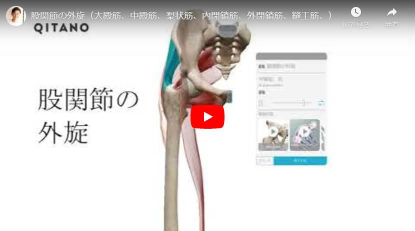 股関節の外旋(大殿筋、中殿筋、梨状筋、内閉鎖筋、外閉鎖筋、縫工筋、)
