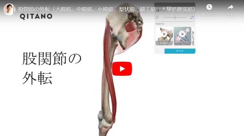股関節の外転(大殿筋、中殿筋、小殿筋、梨状筋、縫工筋、大腿筋膜張筋)