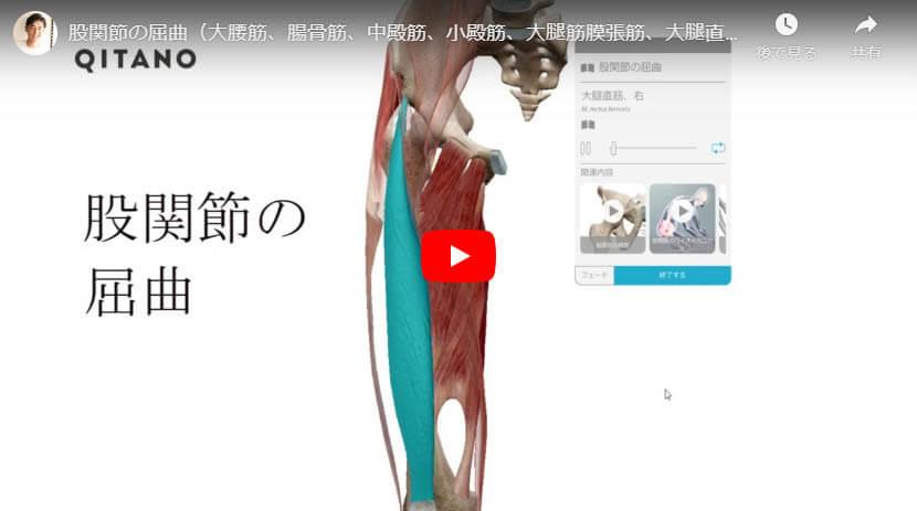 股関節の屈曲(大腰筋、腸骨筋、中殿筋、小殿筋、大腿筋膜張筋、大腿直筋、縫工筋、長内転筋、短内転筋、恥骨筋、大内転筋、腸脛靭帯)