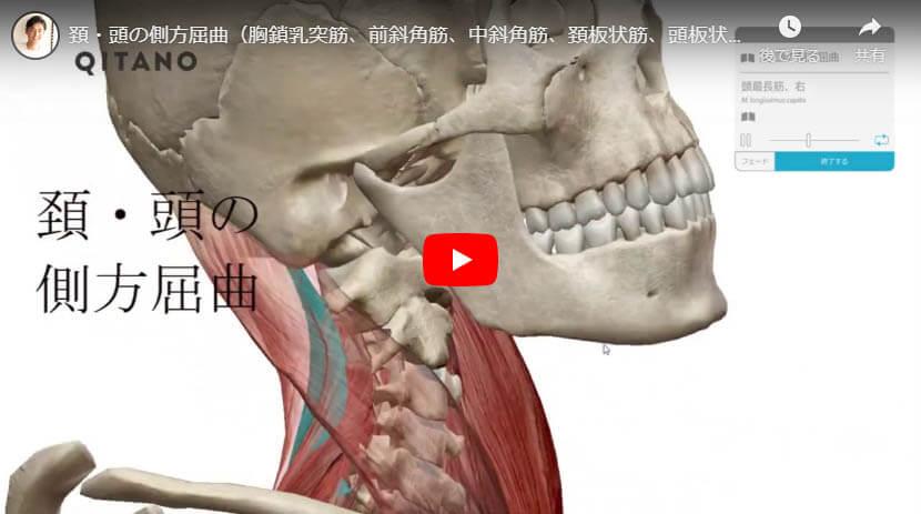 頚・頭の側方屈曲(胸鎖乳突筋、前斜角筋、中斜角筋、頚板状筋、頭板状筋、頭長筋、頚長筋)
