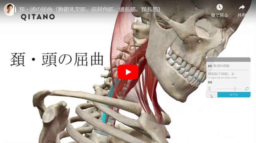 頚・頭の屈曲(胸鎖乳突筋、前斜角筋、頭長筋、頚長筋)