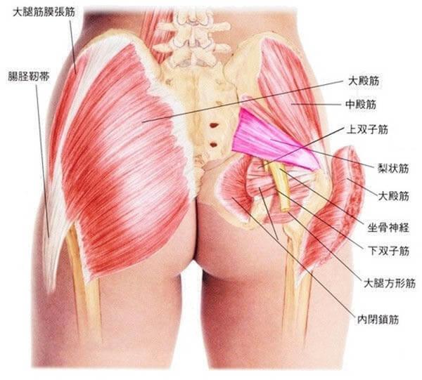 お尻の筋肉(骨盤のインナーマッスル)